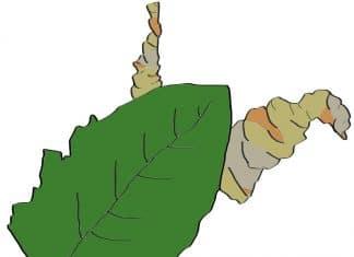 is marijuana legal in West Virginia